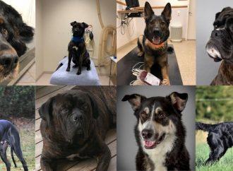 Nominerade till Årets Blodgivarhund