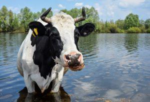 5 miljoner kronor till forskning om antibiotikaresistenta bakterier i vatten