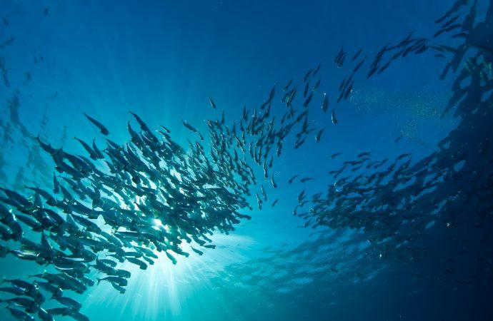 Fiskars välbefinnande vid kommersiellt fiske