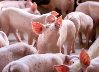 Högre krav på djurvälfärd måste inte betyda mer parasiter