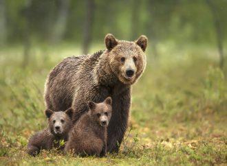 Djurens skydd och välfärd – ny basutställning på Veterinärmuseet