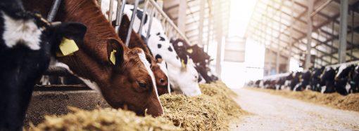 Flera steg för ökat djurskydd – men mer krävs