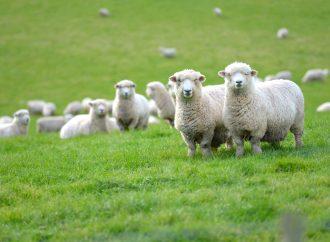 Ny metod för upptäckt av parasiter hos får