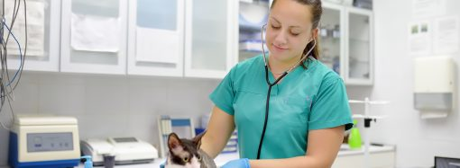 SLU föreslås få ökade resurser för att bygga ut veterinärutbildningen