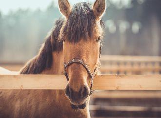 Resistensen mot avmaskningsmedel breder ut sig hos hästens spolmask