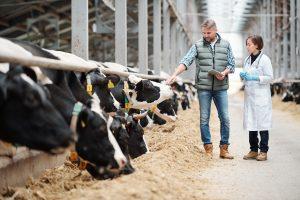 Djursjukvård – när och där det behövs